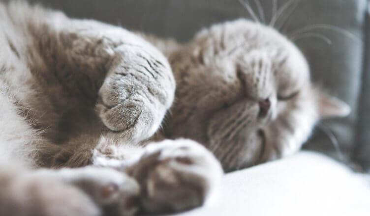 """Die vielen Vorteile des """"Power Nappings"""""""